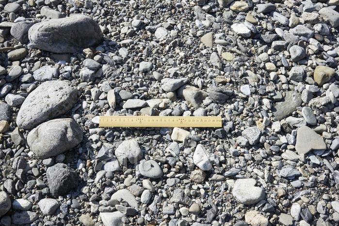 荒川中流域の河原に見られる石の様子 (30cmものさし)