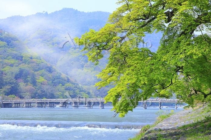 京都府 嵐山 新緑の桂川と渡月橋