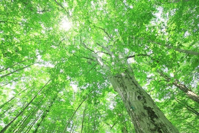 青森県 十和田市 新緑の森