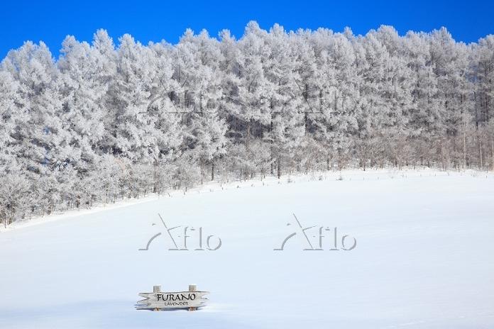 北海道 富良野 雪原と霧氷林