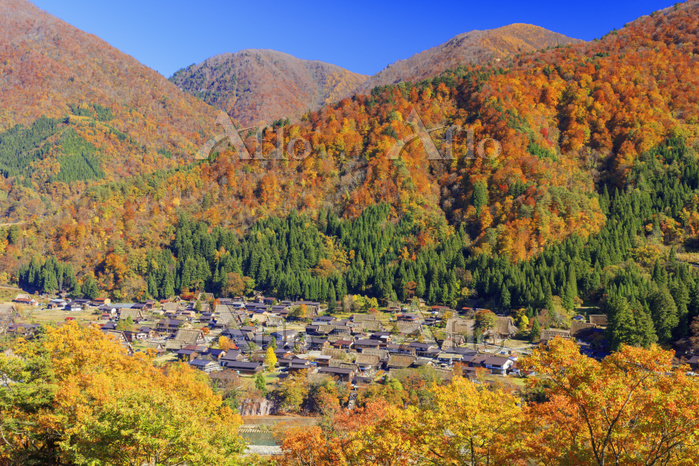 日本 岐阜県 紅葉の白川郷合掌造り集落