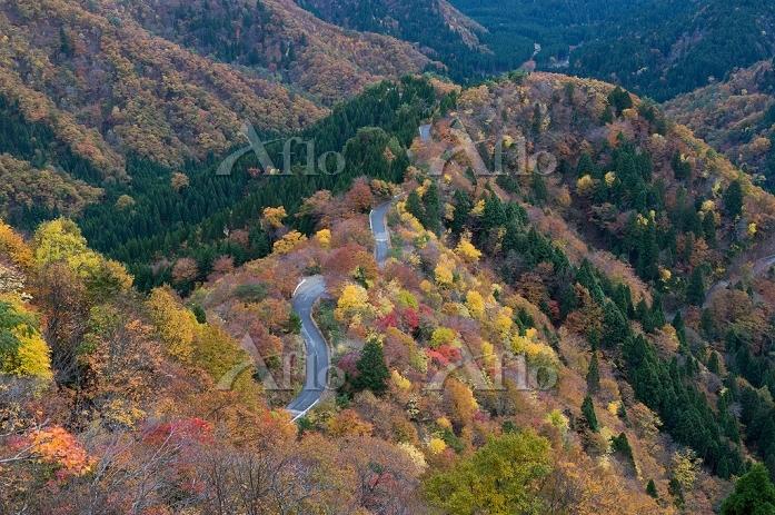 滋賀県 紅葉の小入峠