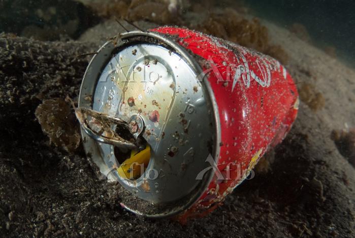 缶に住む ミジンベニハゼ