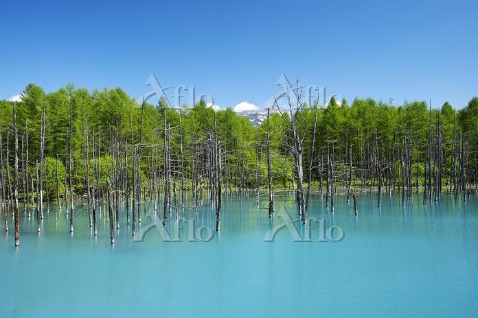 北海道 青い池と十勝岳連峰