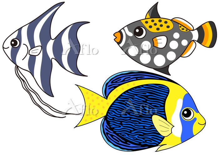 熱帯魚のセット スクリブルド・エンゼルフィッシュ エンゼルフ・・・