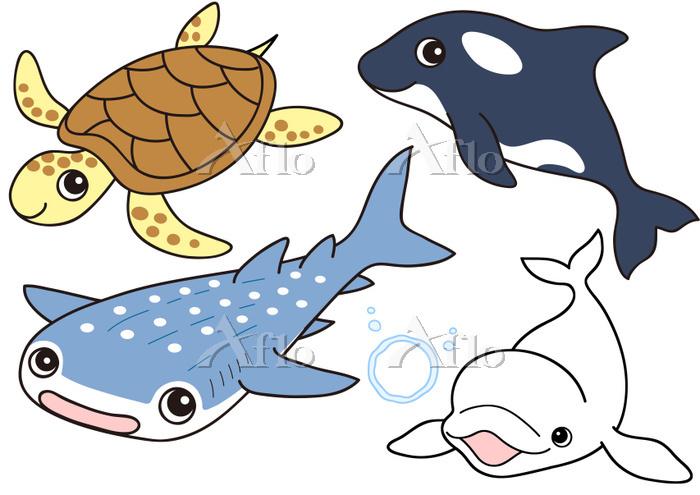 セット ウミガメ シャチ ジンベエザメ シロイルカ ベルーガ