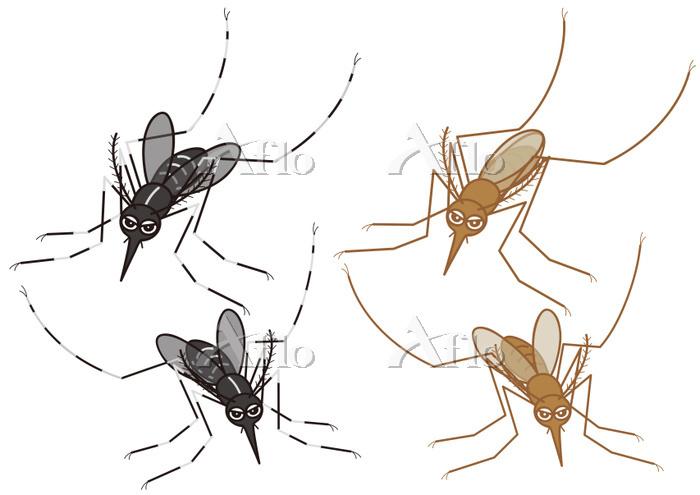 蚊のセット ヒトスジシマカ アカイエカ
