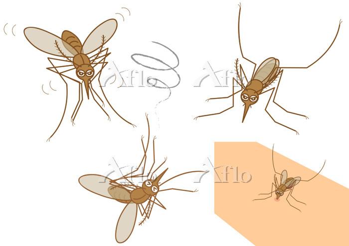 蚊のセット アカイエカ