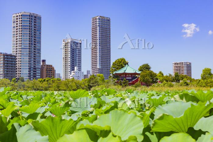 東京都 台東区 不忍池の池