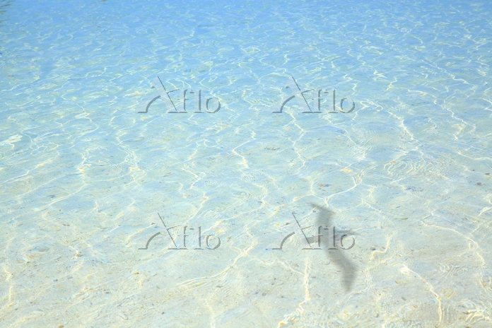 沖縄県 コバルトブルーの海と鳥の影