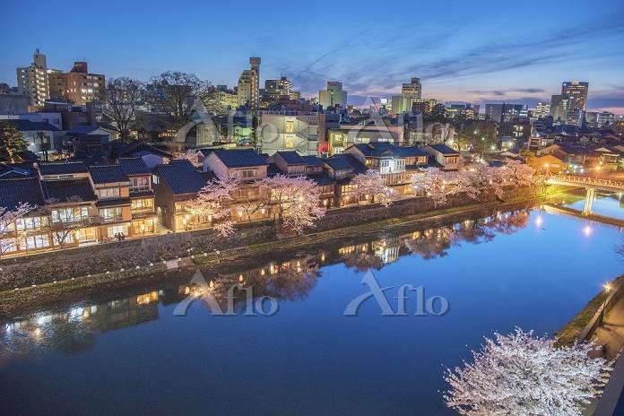 石川県 浅野川の桜と茶屋街