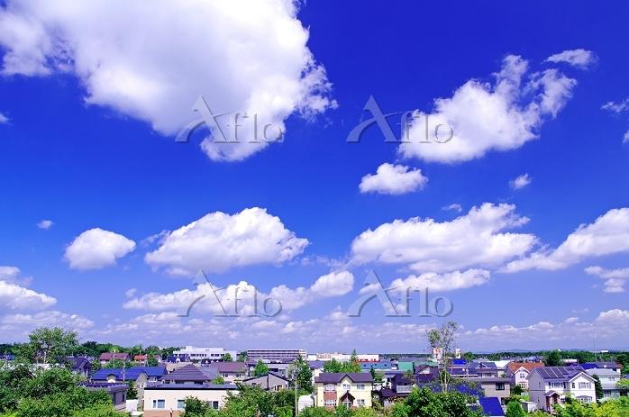 北海道 緑の多い住宅街