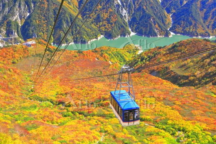 日本 富山県 紅葉の立山ロープウェイ