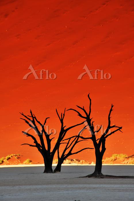 ナミビア ナビブ砂漠のデッドフレイ