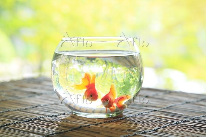 縁側に置かれた金魚鉢 日本の夏