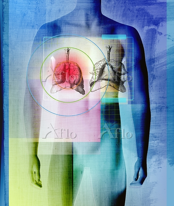 Human body with liver and lung・・・