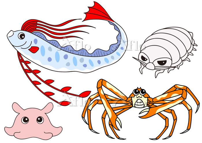 深海魚のセット リュウグウツカイ メンダコ タカアシガニ ダ・・・