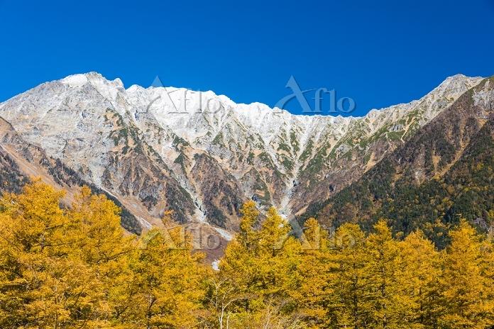 長野県 上高地 黄葉のカラマツと穂高連峰