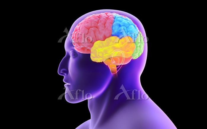 Conceptual image of human brai・・・