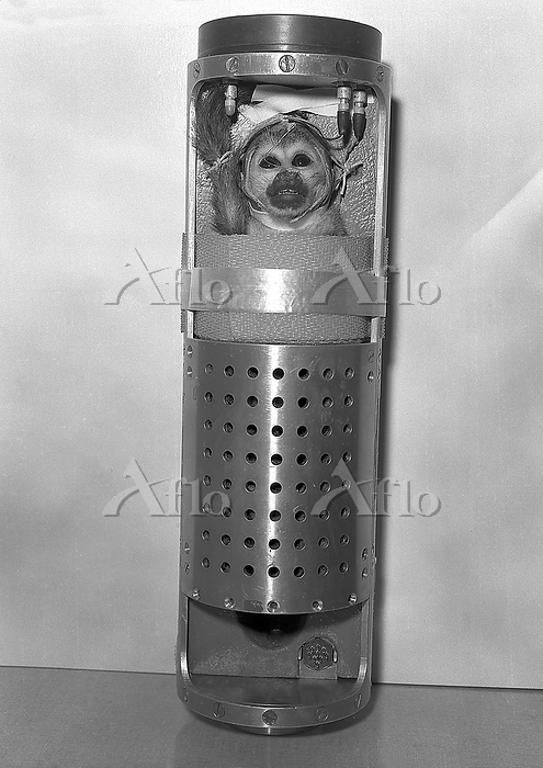 Squirrel monkey launch capsule・・・