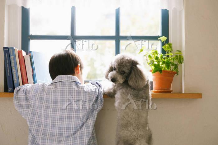 窓辺にいる男の子と犬