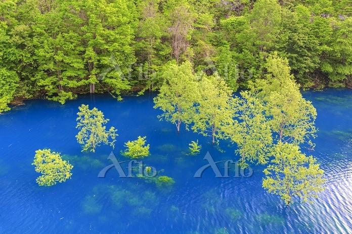 秋田県 宝仙湖と立木