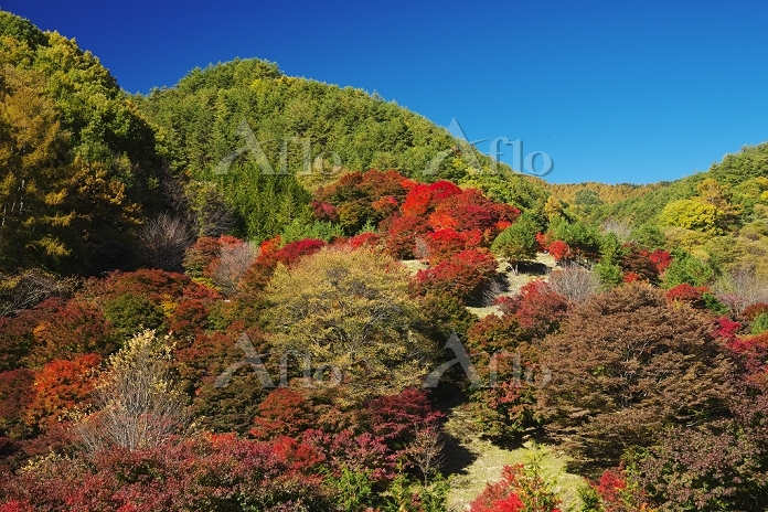 長野県 もみじ湖の紅葉