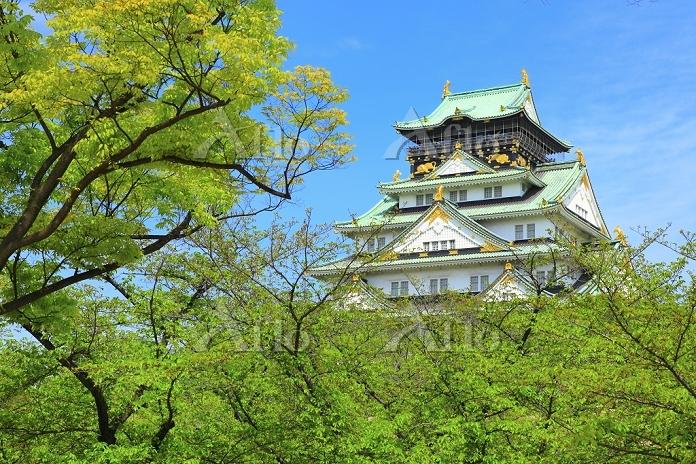 大阪府 大阪城 西の丸庭園から見る天守閣
