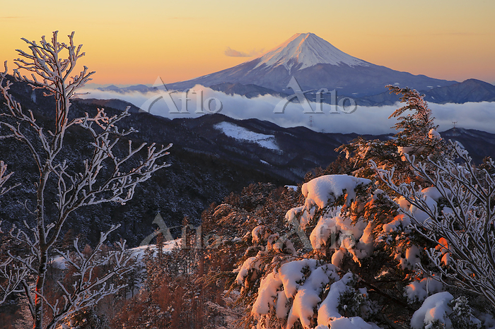 山梨県 大菩薩峠 朝焼けの富士山と雪景色の樹林