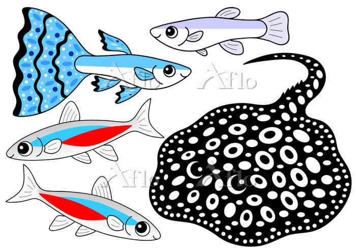 熱帯魚のセット グッピー ネオンテトラ ダイアモンドポルカド・・・