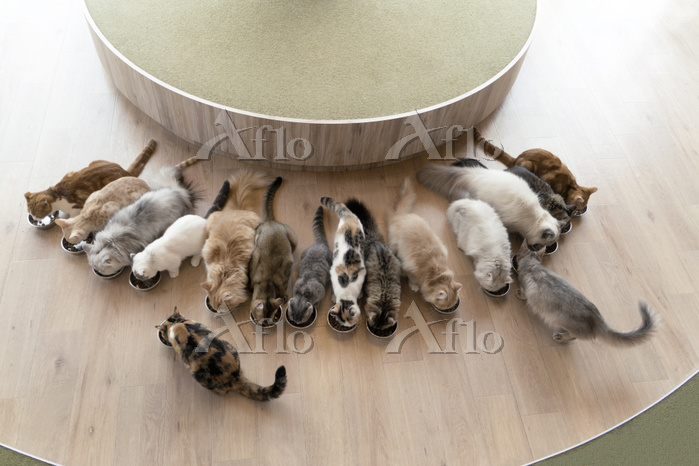 Overhead view of cats having m・・・