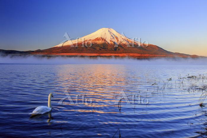 山梨県 朝日に照らされる富士山と雲海 紅富士