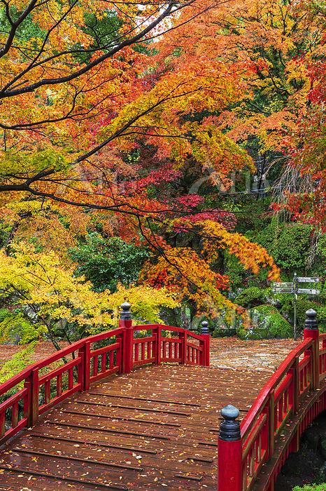 紅葉の熱海梅園