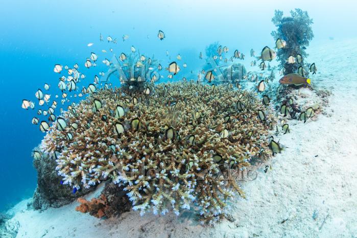 フィリピン ボホール サンゴ礁のイメージ