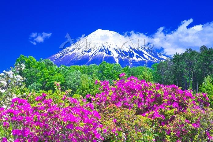 静岡県 ツツジと富士山