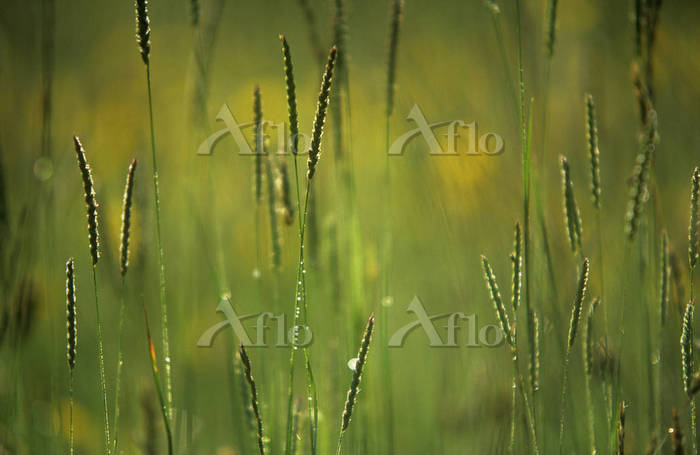 Grass. Photo by Peter Straw