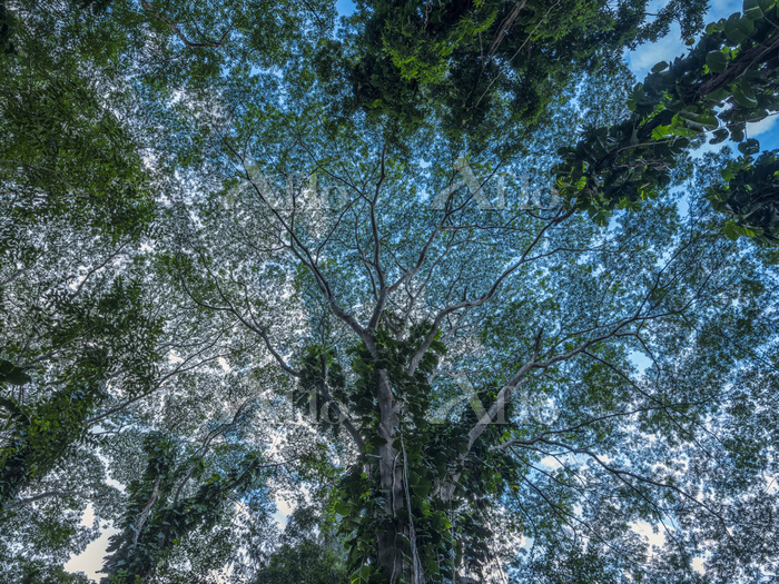 Looking up into the canopy of ・・・