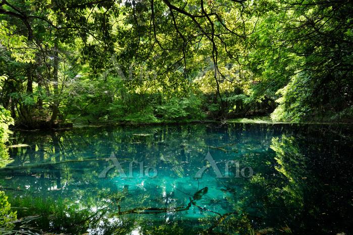 山形県 遊佐町 新緑の丸池