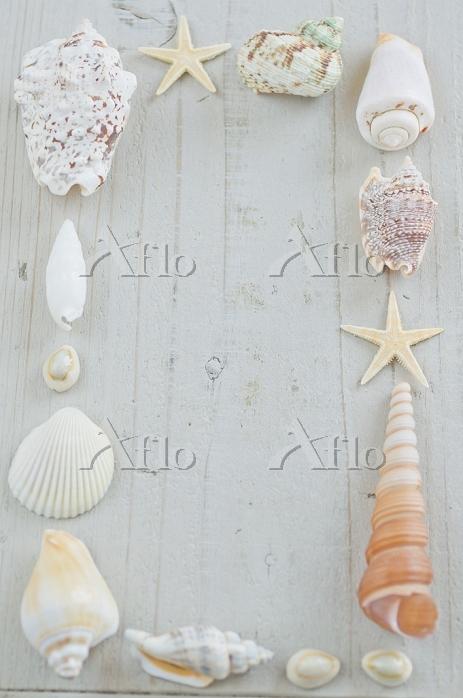 貝殻のフレーム 木目