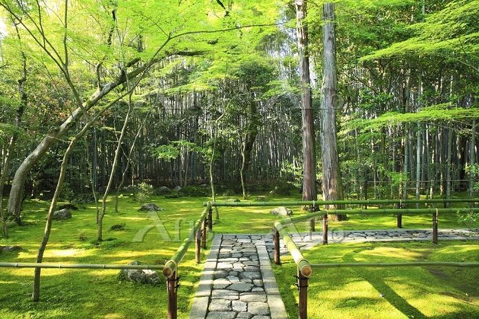 京都府 大徳寺 新緑の高桐院参道