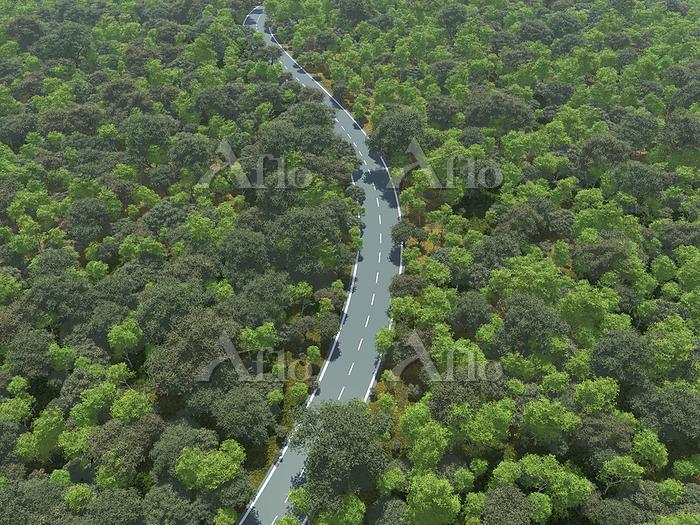 広大な緑の森を貫く一本道