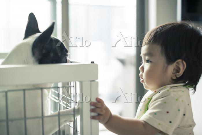 日本人の男の子とペットの犬