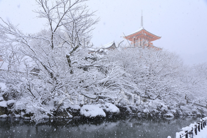 京都府 清水寺 雪降る朝の三重塔と庭園
