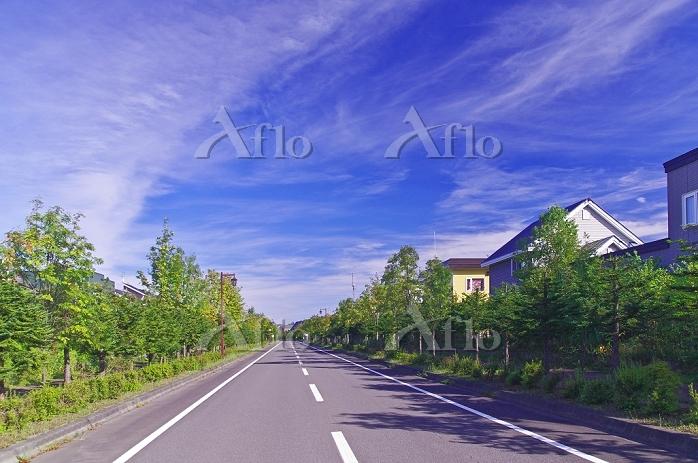 北海道 緑の多い住宅地の静かな道