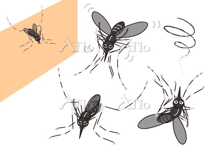 蚊のセット ヒトスジシマカ