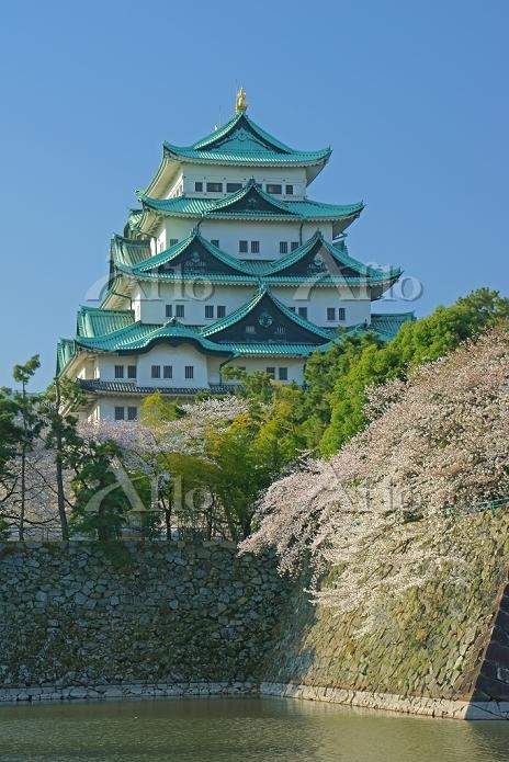愛知県 春の名古屋城