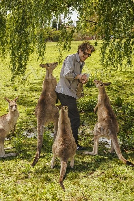 Australia, New South Wales, ma・・・