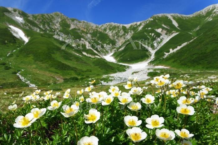 富山県 チングルマ群生と立山・真砂岳~別山の稜線