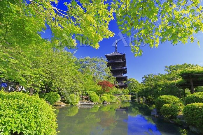 京都府 新緑美しい春の東寺