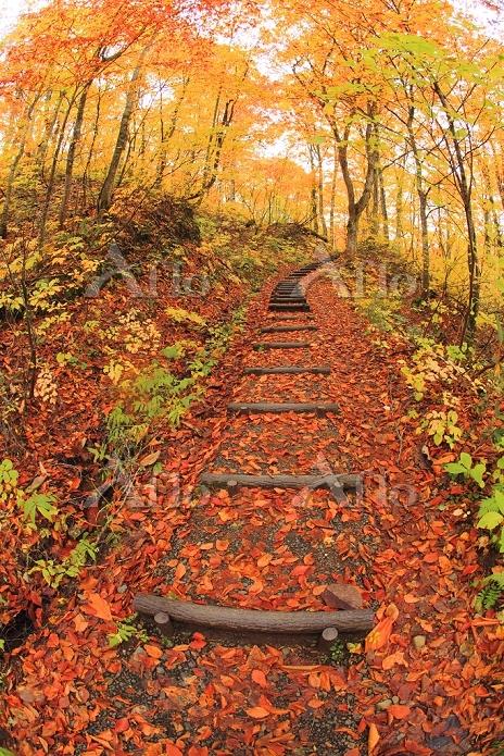 青森県 白神山地・白神ブナ散策道の紅葉